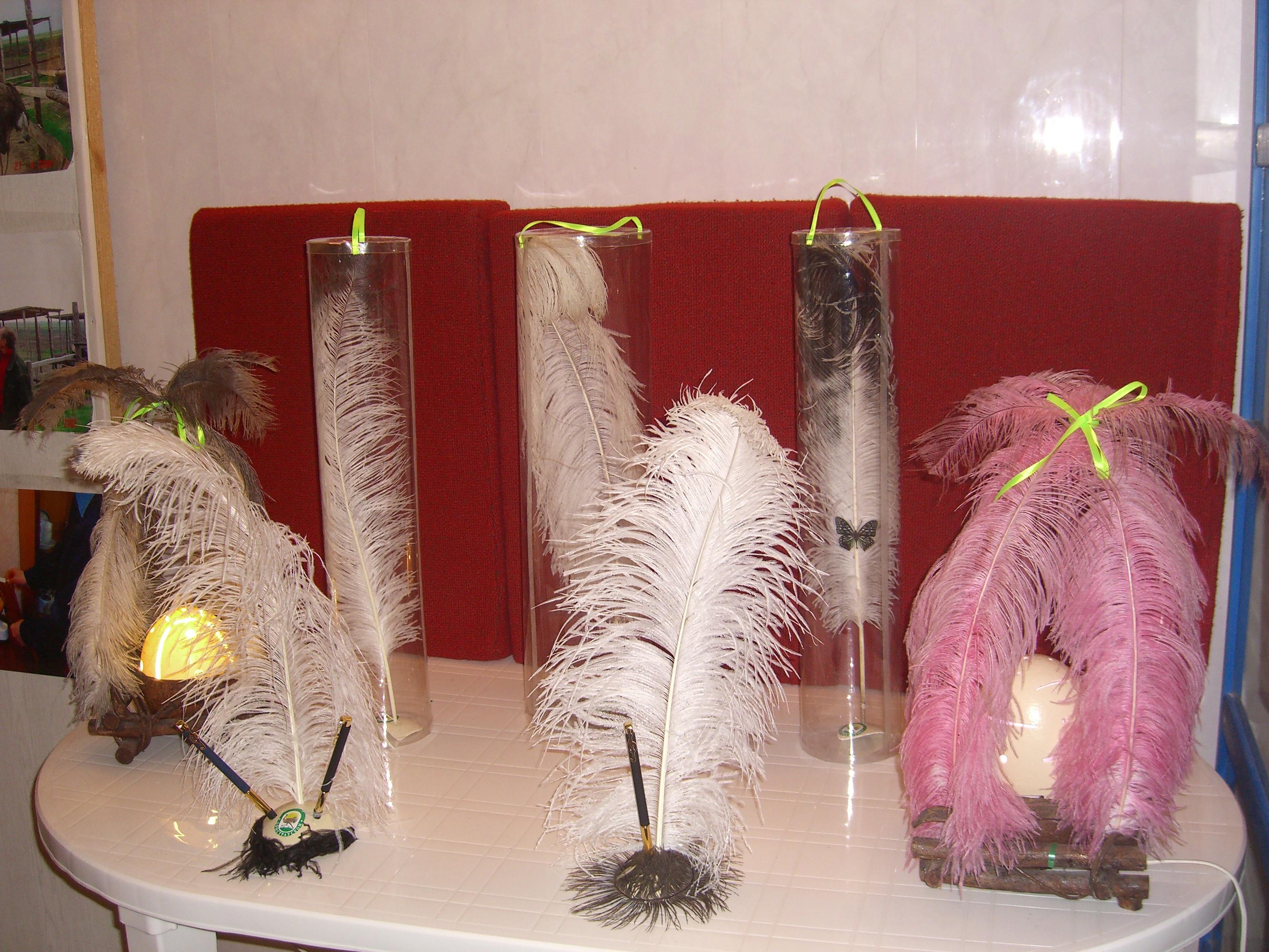 Поделка из перьев страуса 6