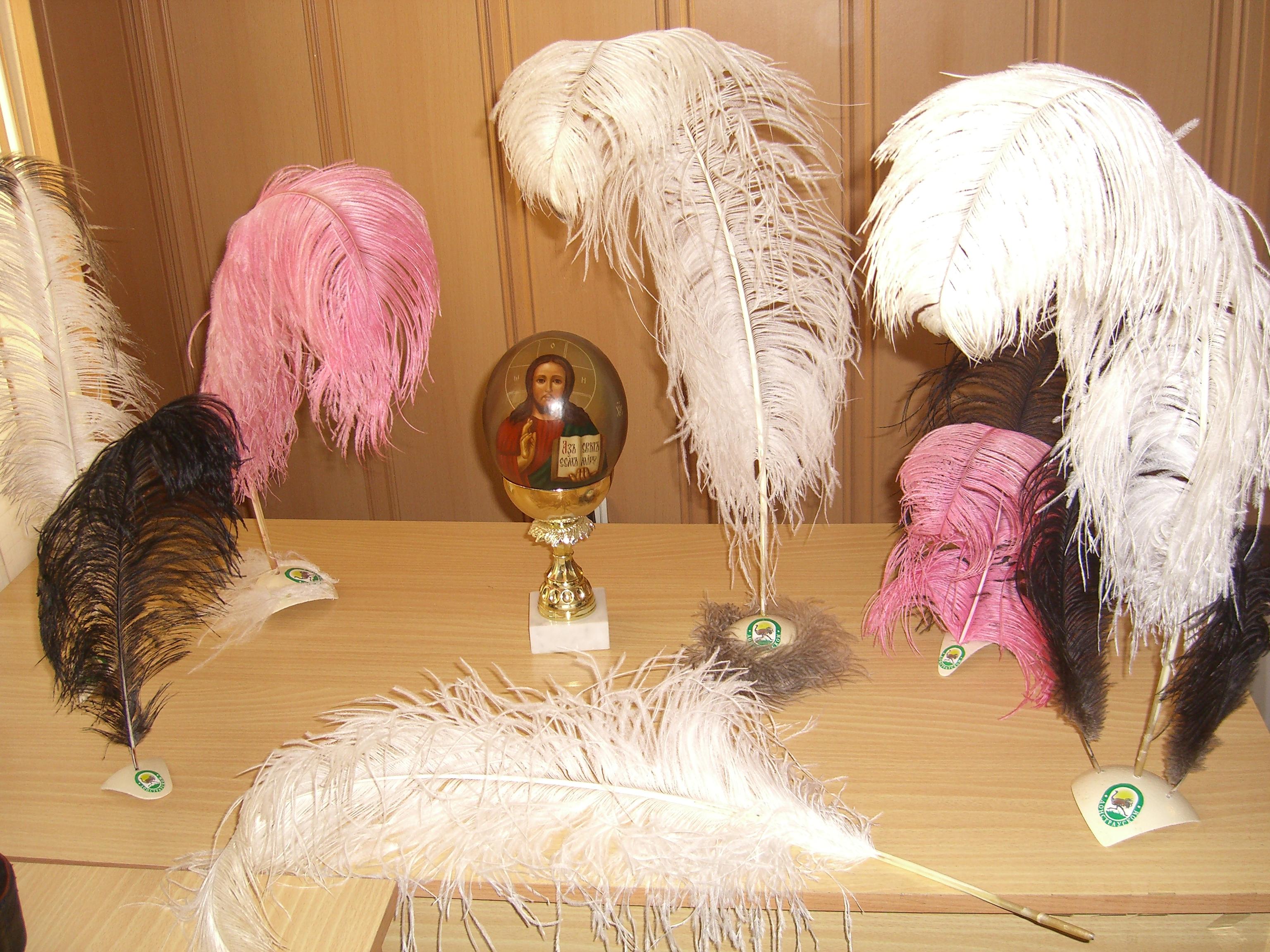 Поделка из перьев страуса 49